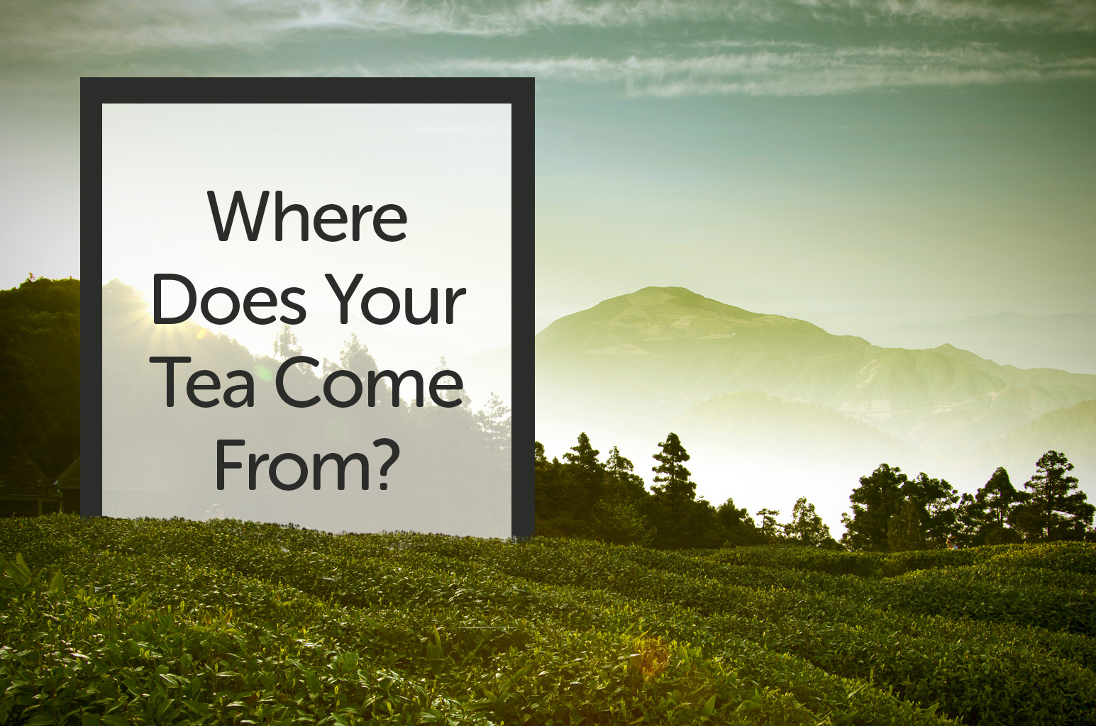 Where Does Your Tea Come From?